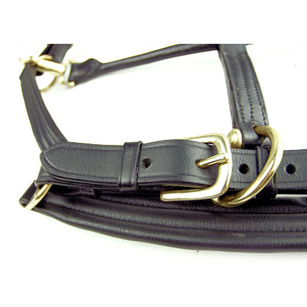 Dever Ascot Padded Leather Headcollar