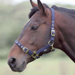 Shires Adjustable Nylon Headcollar
