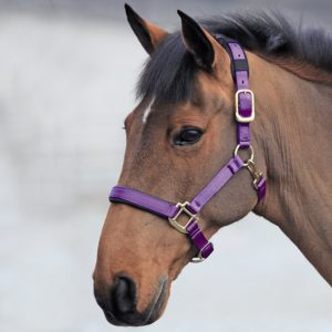 shires nylon headcollar purple